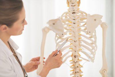 скелет человека для демонстрации