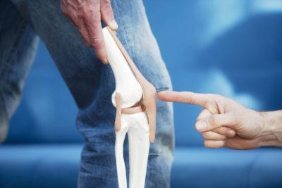 макет строения колена