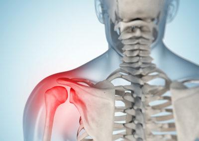грудной отдел скелета