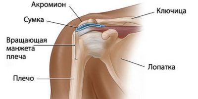 Изображение - Вывих плечевого сустава причины na-foto-predstavlena-anatomicheskaya-struktura-ple-400x200