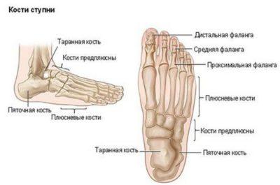 кости ступни