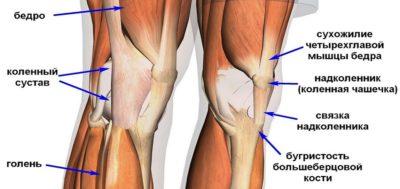 связочный аппарат области колена