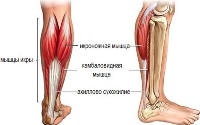 анатомическое изображение нижней конечности