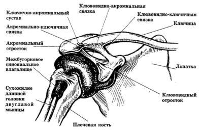 Изображение - Акромиально ключичное сочленение плечевого сустава DNXY8NwW0AA8rZy-400x255