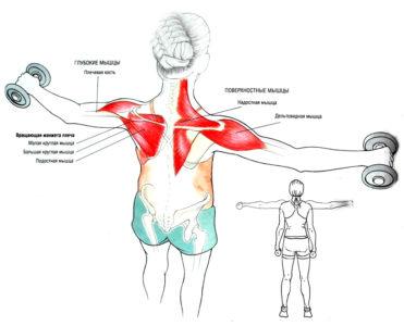работа мышц при спортивных упражнениях