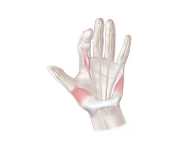 связки и сухожилия левой руки