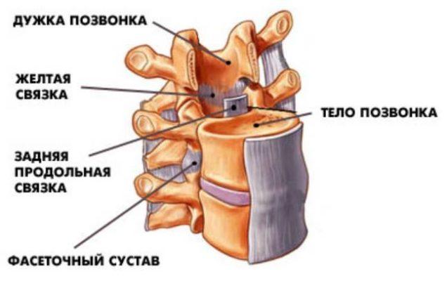 передняя продольная связка позвоночника