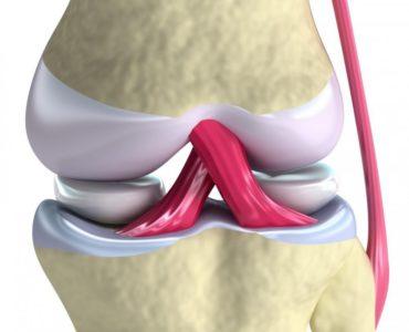 сухожилия и связки колена