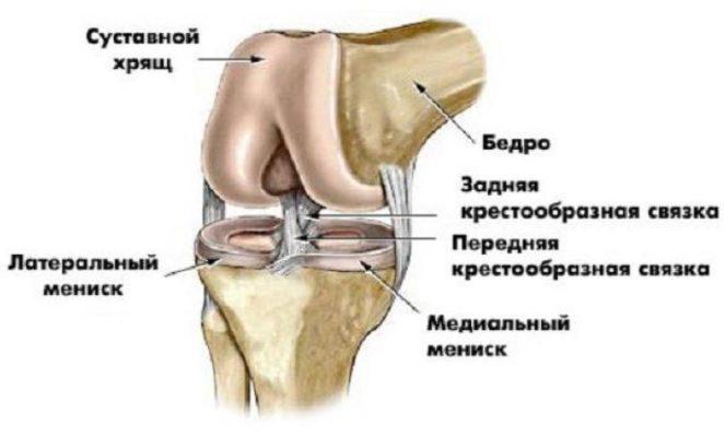 общая структура колена