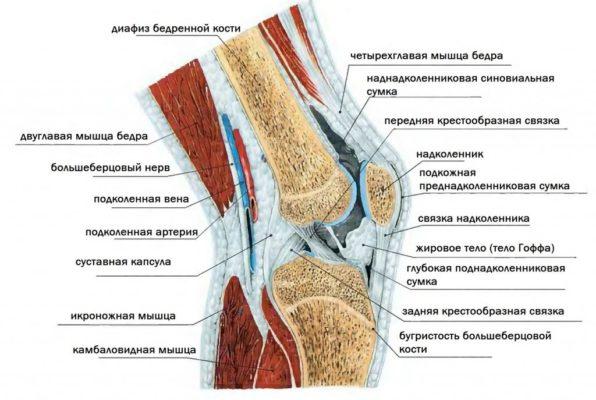 Изображение - Связки и сухожилия коленного сустава e3screen3722d3b8-596x400