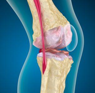 строение связок в колене