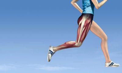 связки и мышцы ног