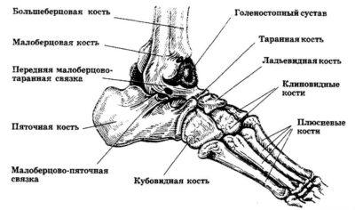 Изображение - Суставы и связки стопы Kosti-stopy-400x236