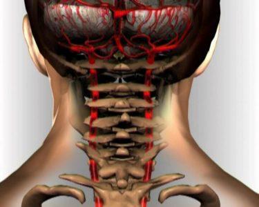 артерия в позвоночнике