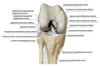 строение колена: связки кости, мыщелок
