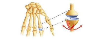 Эллипсоидный сустав
