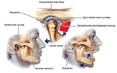 анатомия височно-нижнечелюстного сустав