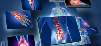 анатомия тела человека
