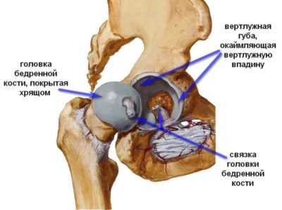 анатомия ТБС