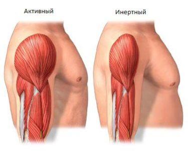 атрофия мышечных волокон