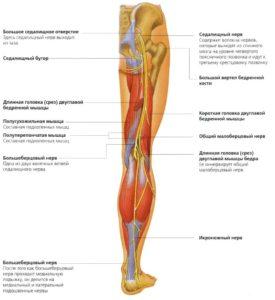 нервы ноги