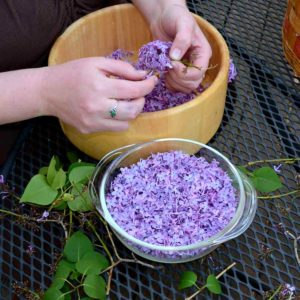 приготовление настойки из цветов сирени