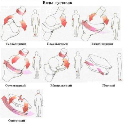 виды суставов человека