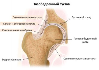 тазобедренный сустав человека
