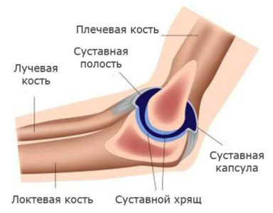 Изображение - Связки локтевого сустава анатомия stroenie-loktevogo-sustava-384x300