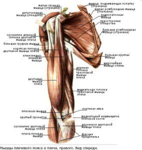 Изображение - Связки локтевого сустава анатомия trsdge463weyh454h5-285x300